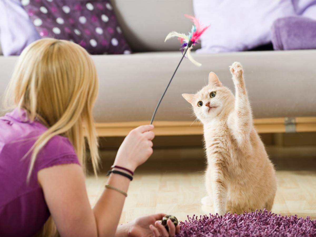 5 dingen om je kat te entertainen