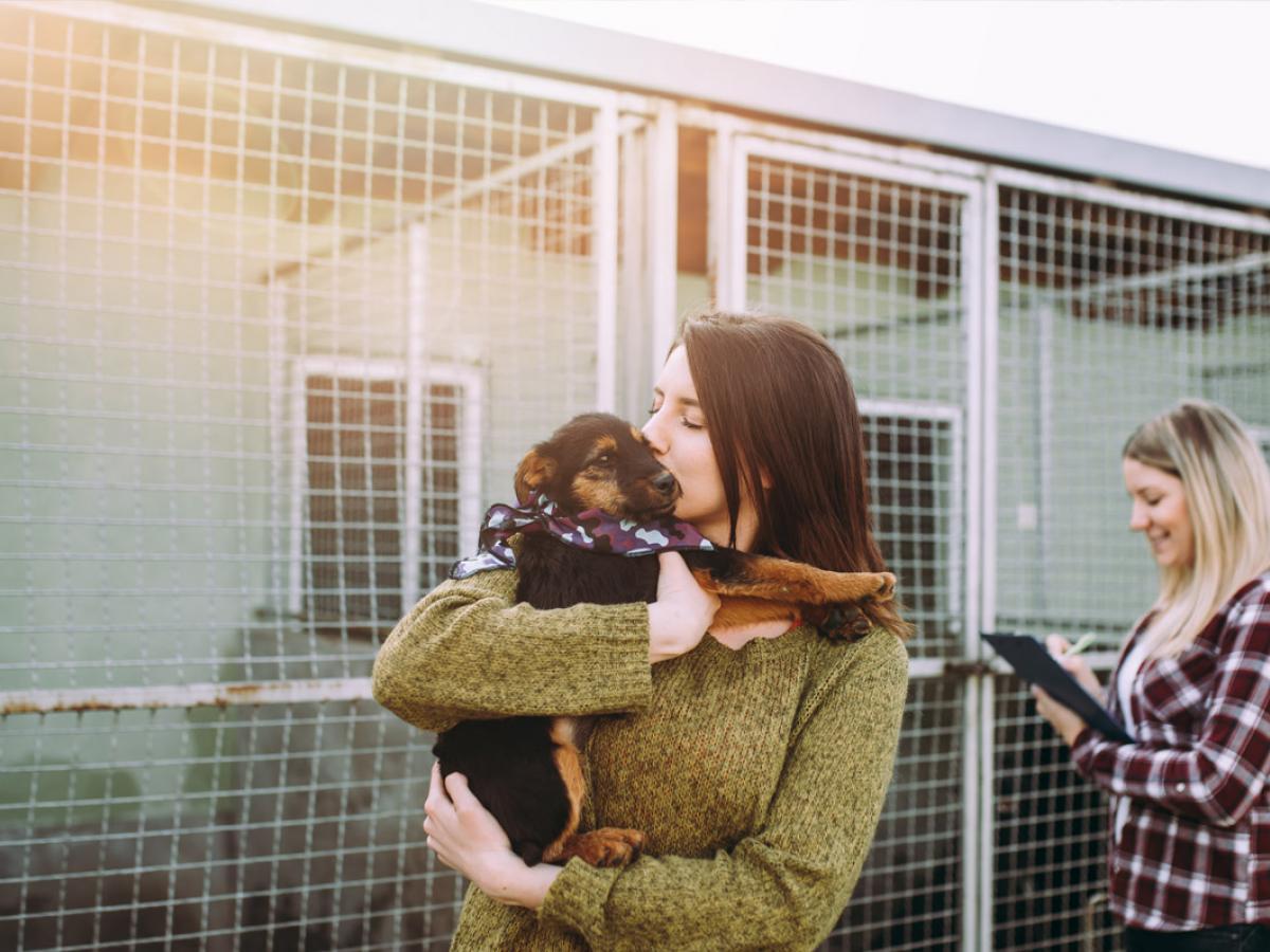 Een huisdier adopteren tijdens de coronacrisis: ja of nee?