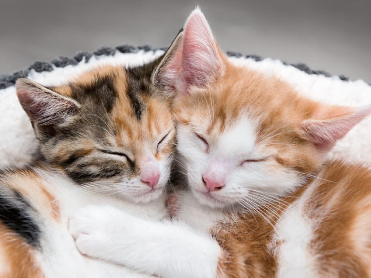 Hebben katten een vriendje nodig?