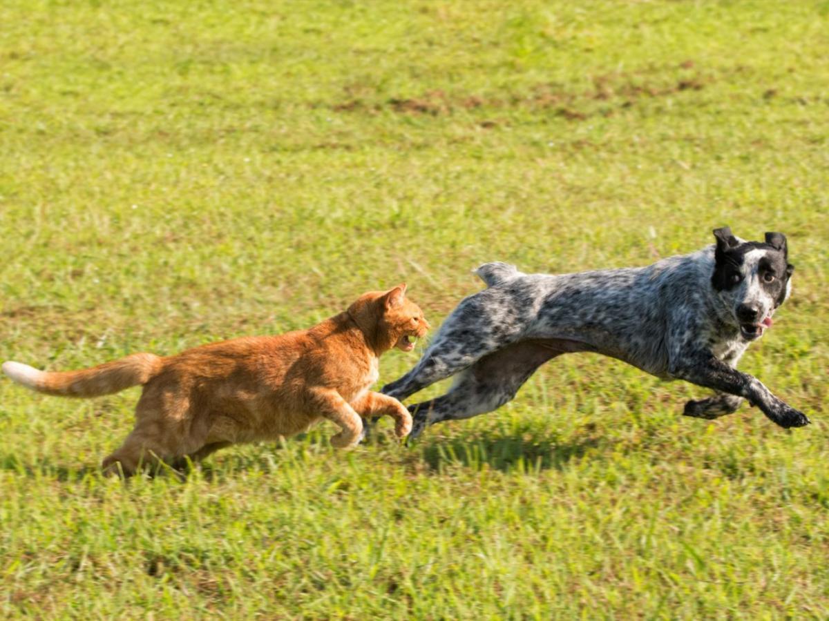 """Het """"kat en hond"""" verhaal… een fabeltje?"""