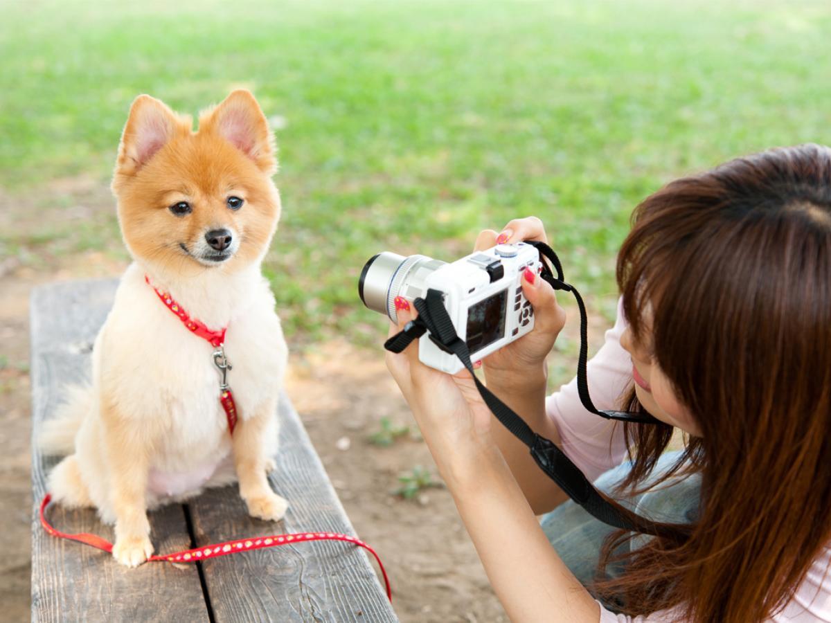 Hoe maak je de beste foto's van je viervoeter?