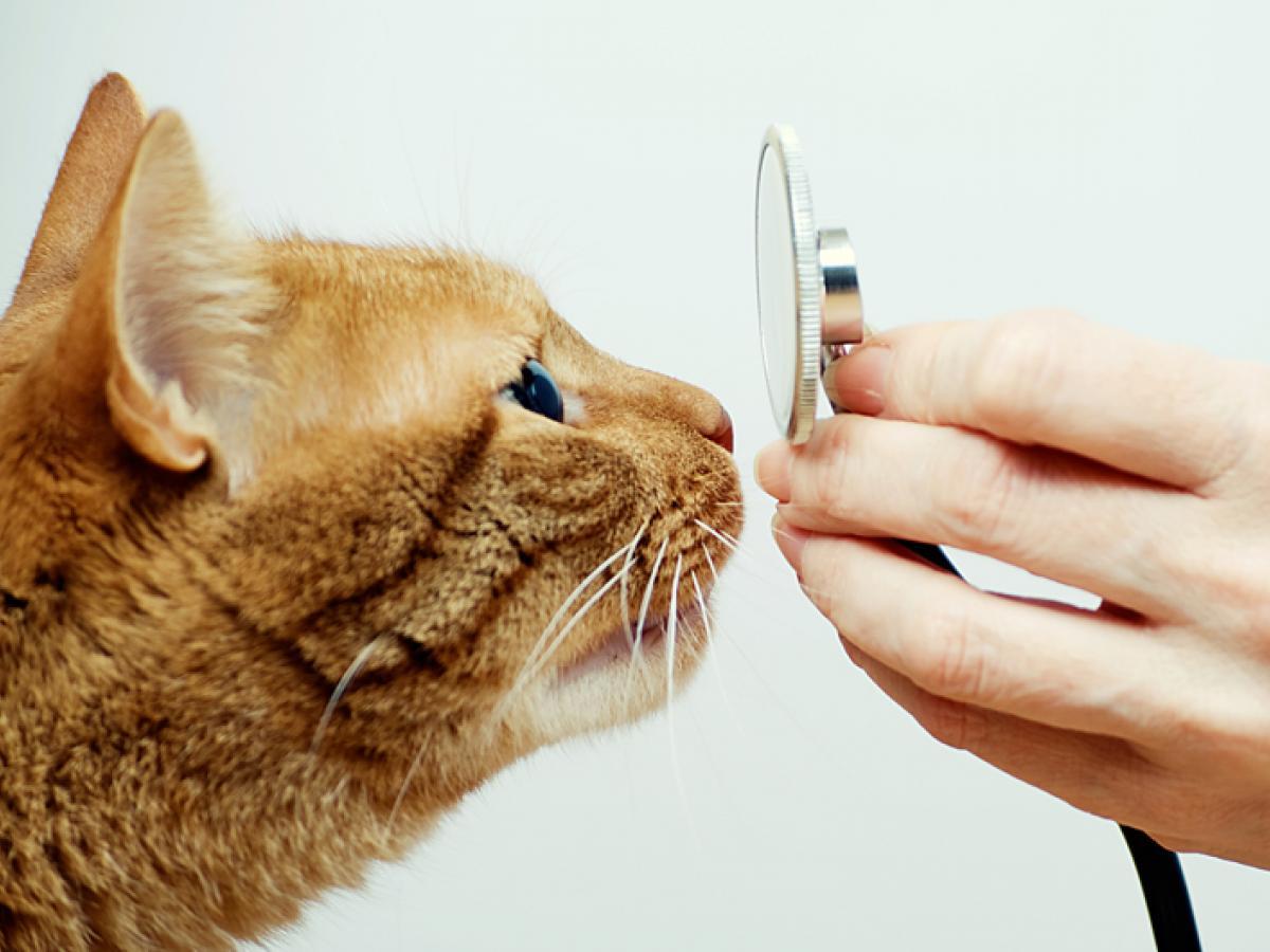 Longworm, het klinkt smerig en dat is het ook! Lees hier hoe je jouw kat kan beschermen.