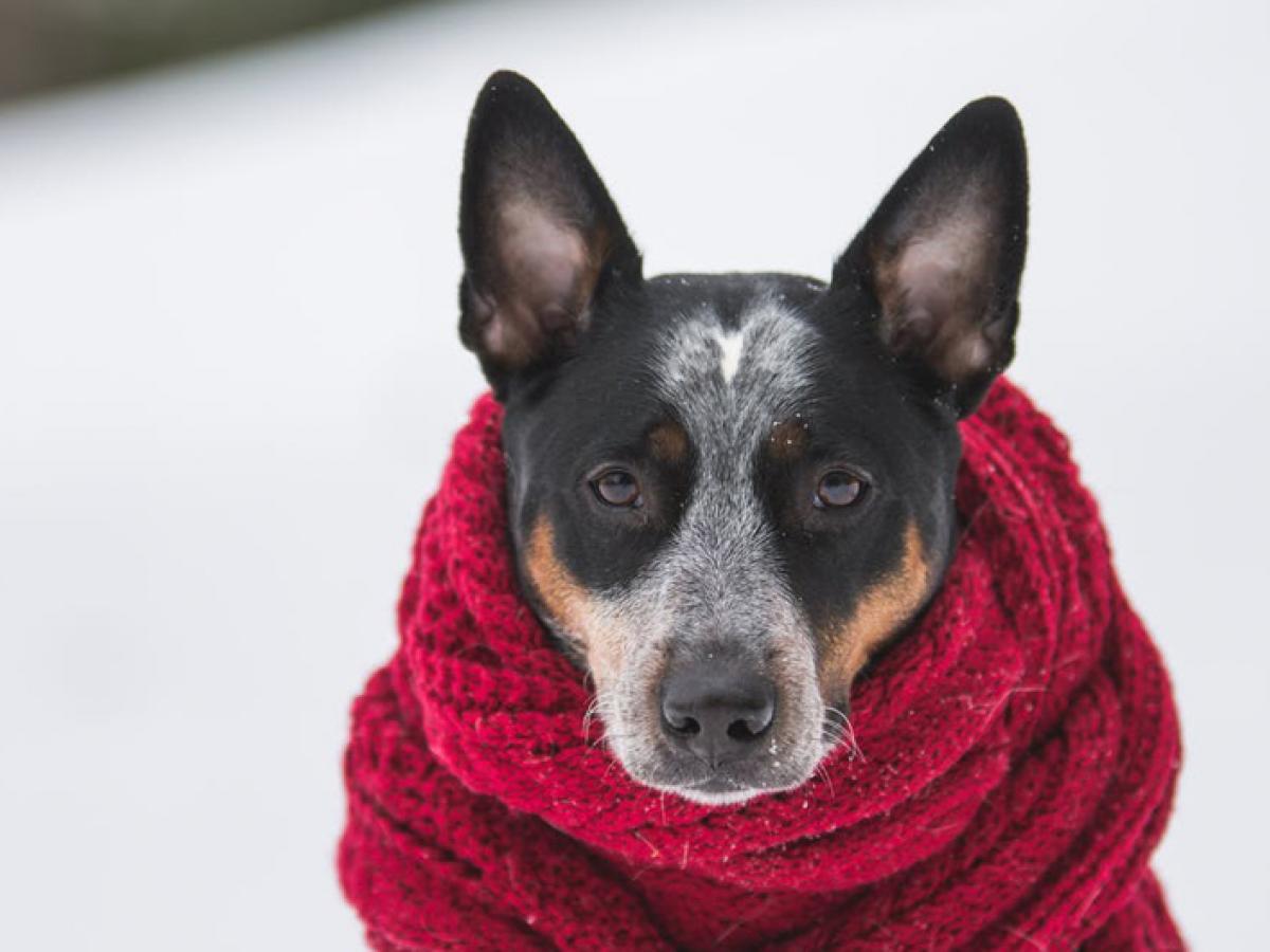 Met deze tips maak je de winterdagen draagbaar voor je dier