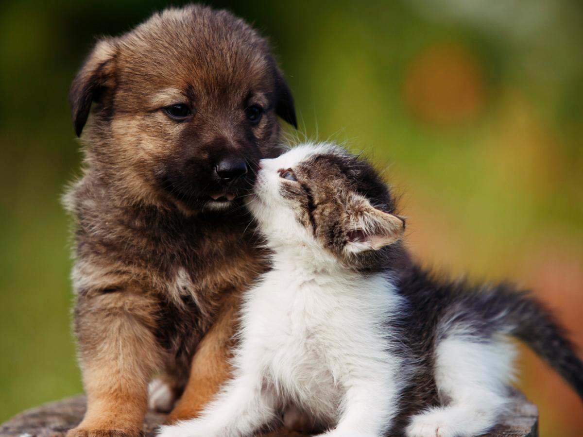 Populaire katten en hondennamen