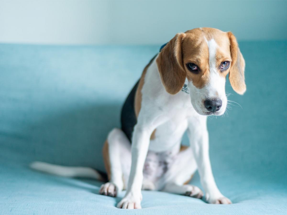 Stress bij honden: herken je hond zijn stresssignalen