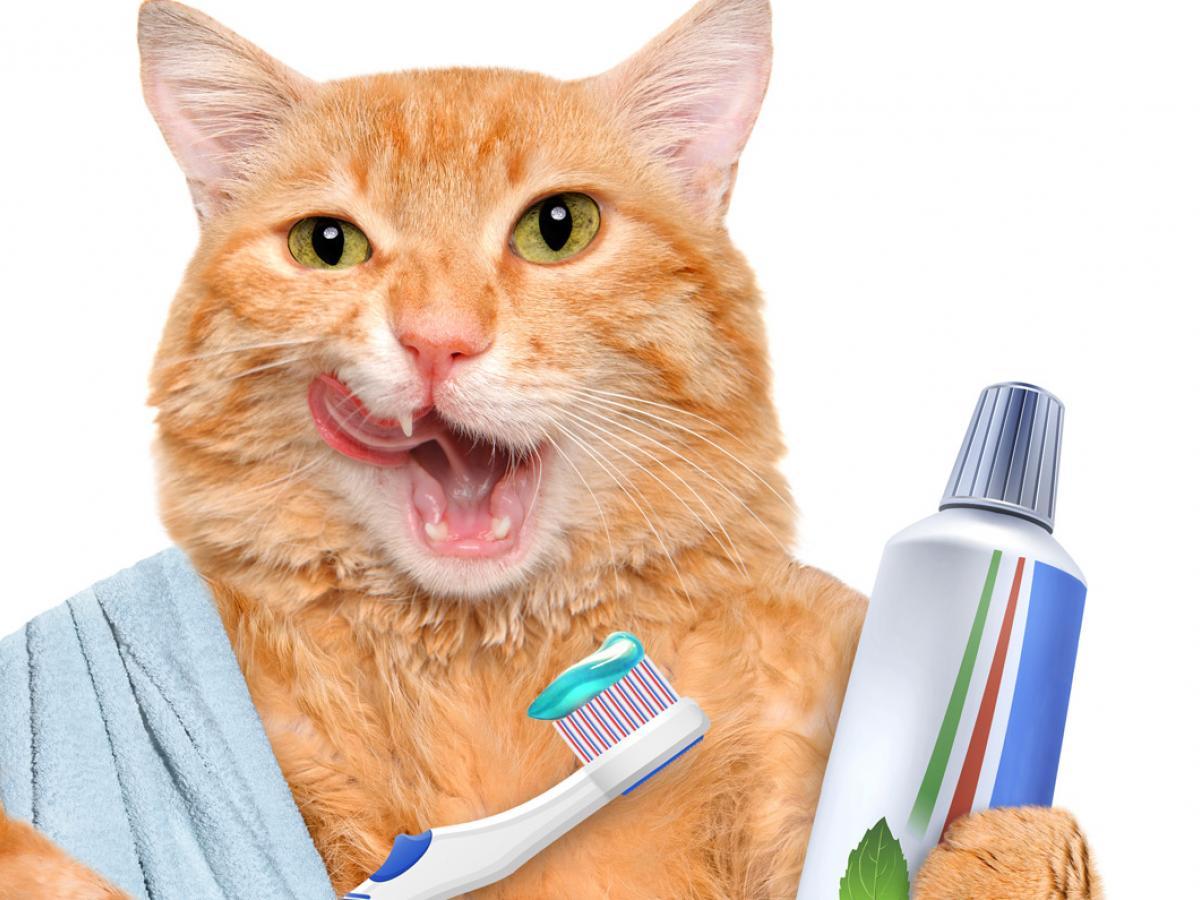 Tips & Uitleg: Hoe poets je de tanden van je kat?