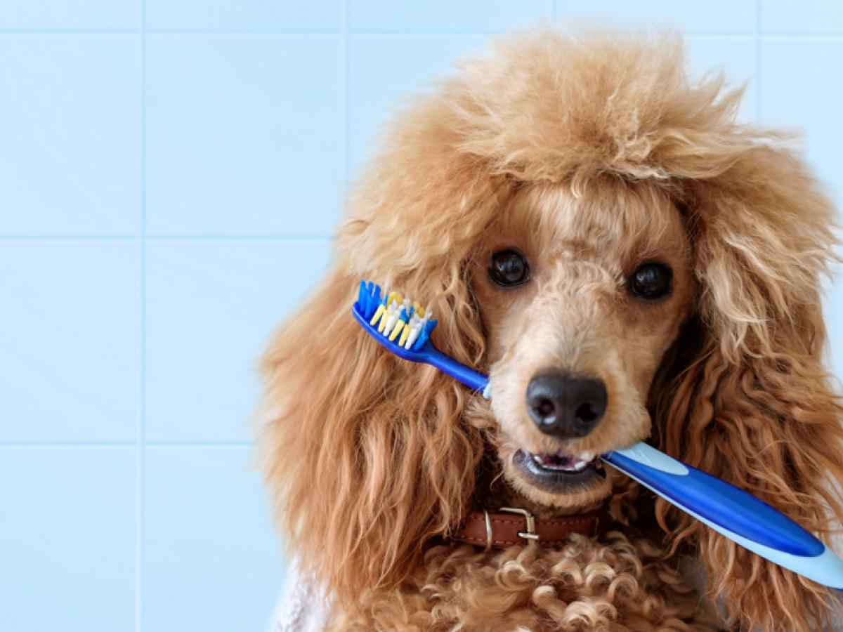 Wanneer dient je huisdier op tandcontrole te gaan?