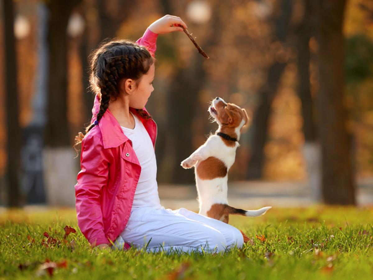 Welke trucjes kan je je puppy leren?