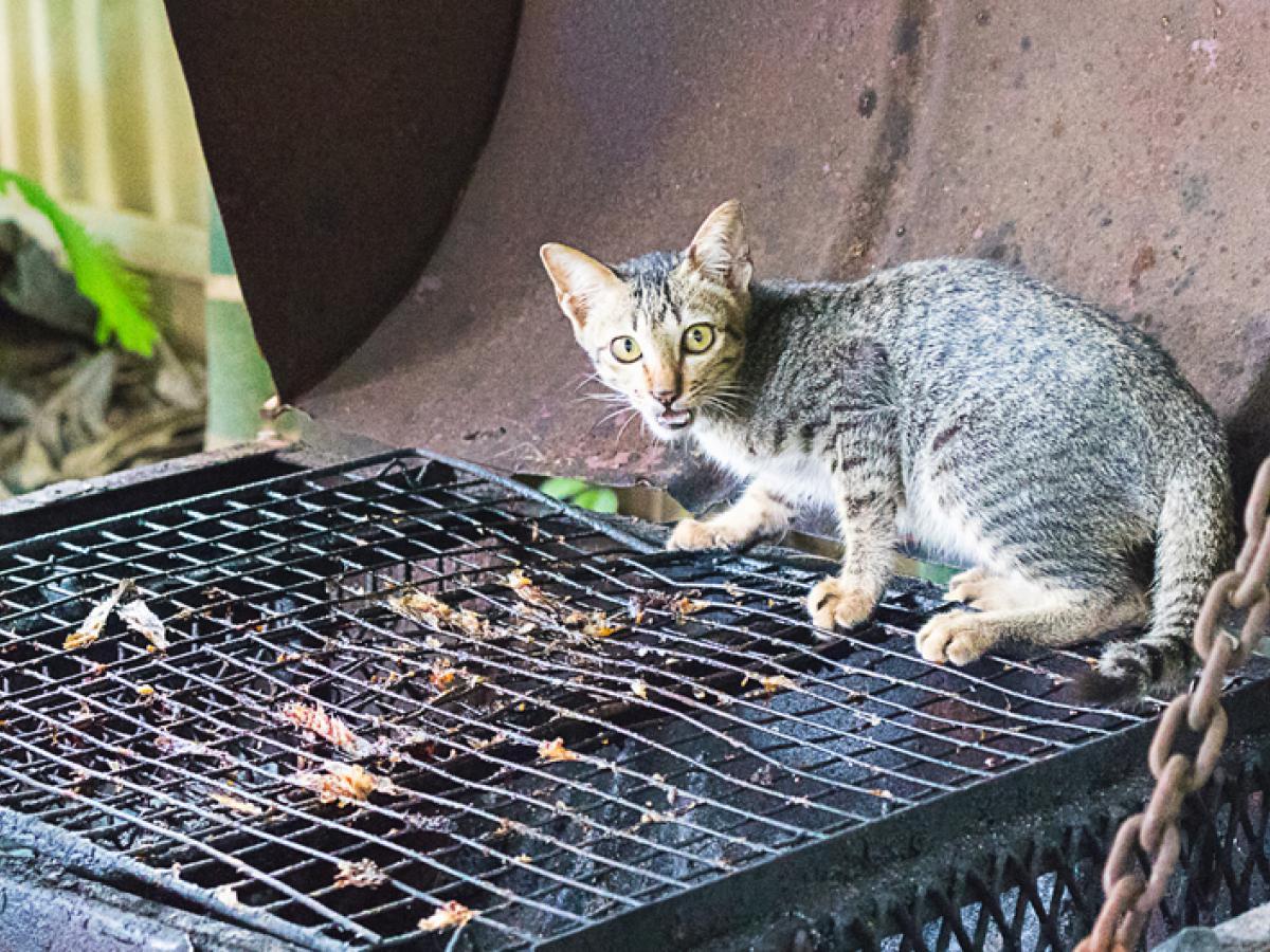 Zo houd je jouw kat op afstand tijdens het barbecueën